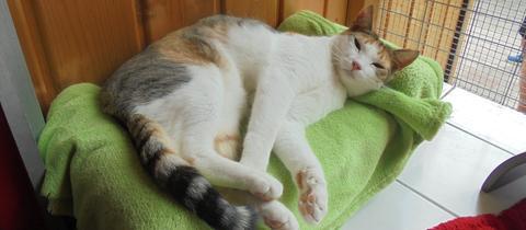Katze Marie