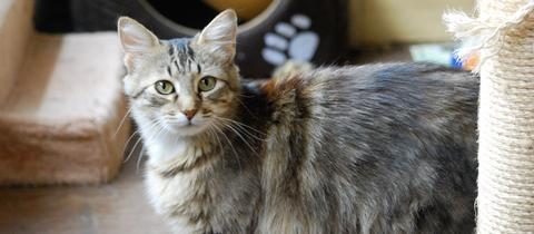 Katze Sina