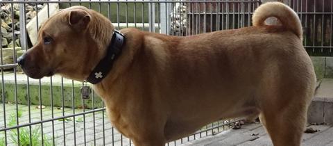 Hund Paco aus Bad Hersfeld