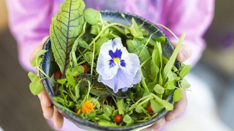 Wild-Salat mit Blüten in einer Bowl