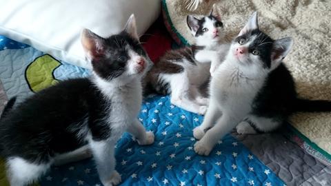 Drei Katzenkinder aus Borken