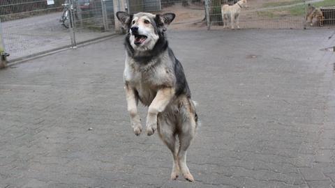 Alia aus dem Tierheim Babenhausen
