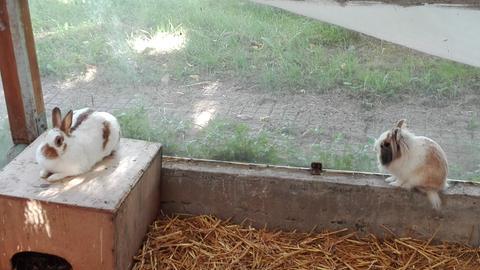 Hucky und Lucky aus dem Tierheim in Frankfurt