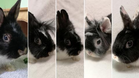 Die Kaninchen Muffin, Krümel, Hermine, Lotta und Einstein aus dem Tierheim Korbach