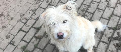 Mr. Happy aus dem Tierheim in Marburg