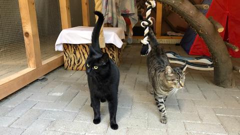 Ole und Oreo