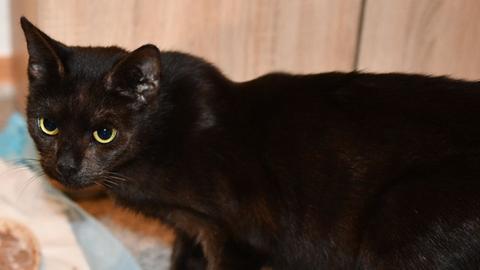 Lucy aus der Tiernothilfe Schwalmstadt
