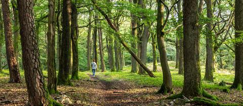 Frau auf einem Wanderweg bei Oberursel