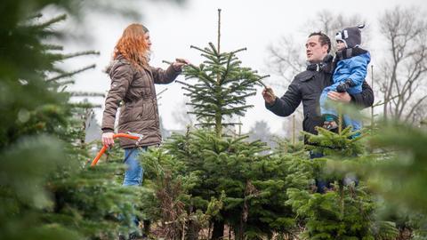 Ehepaar mit Kind wähl in einer Schonung einen Weihnachtsbaum aus