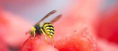 Eine Wespe sitzt auf einem Melonenstück