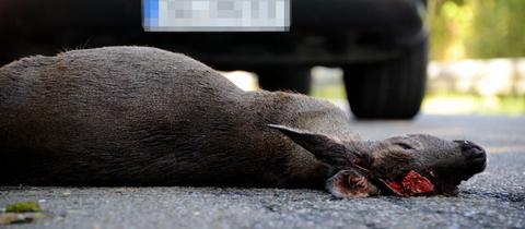 Ein totes Reh liegt vor einem Auto auf der Straße.
