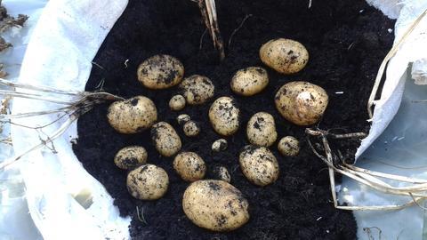 Helga Kalhöfers Kartoffeln im Sack