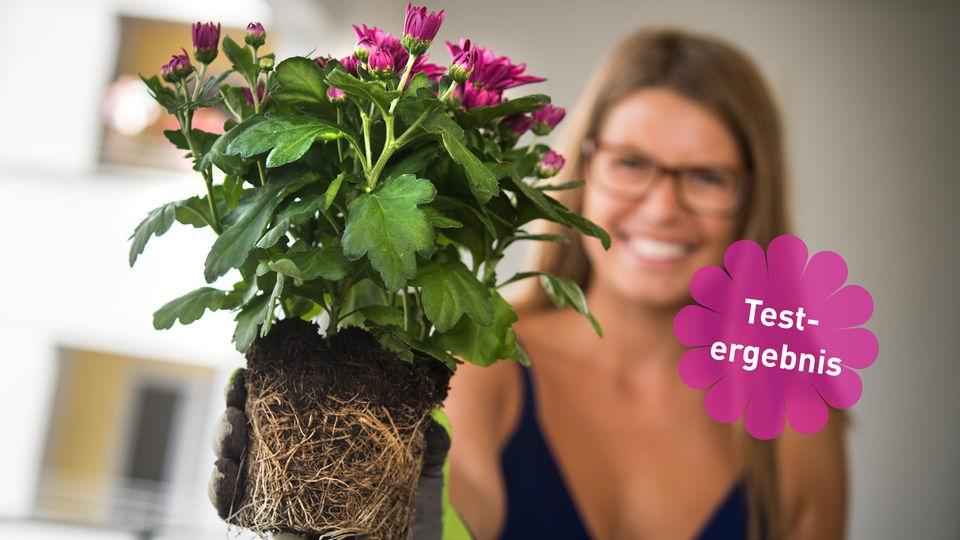 Typologie Der Pflanzenfreunde | Hr4.de | Themen